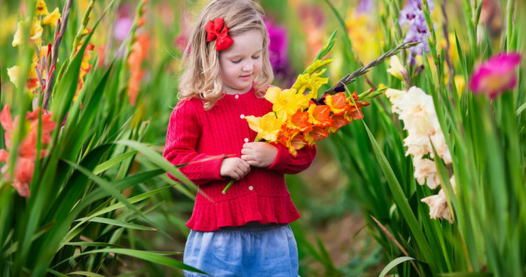 Companion Planting With Gladiolus: Plants That Grow Well With Gladiolus